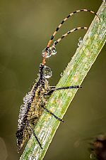 חרקים בקריסטלים