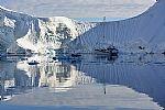 לובן אנטארקטי