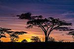 שקיעה אפריקאית